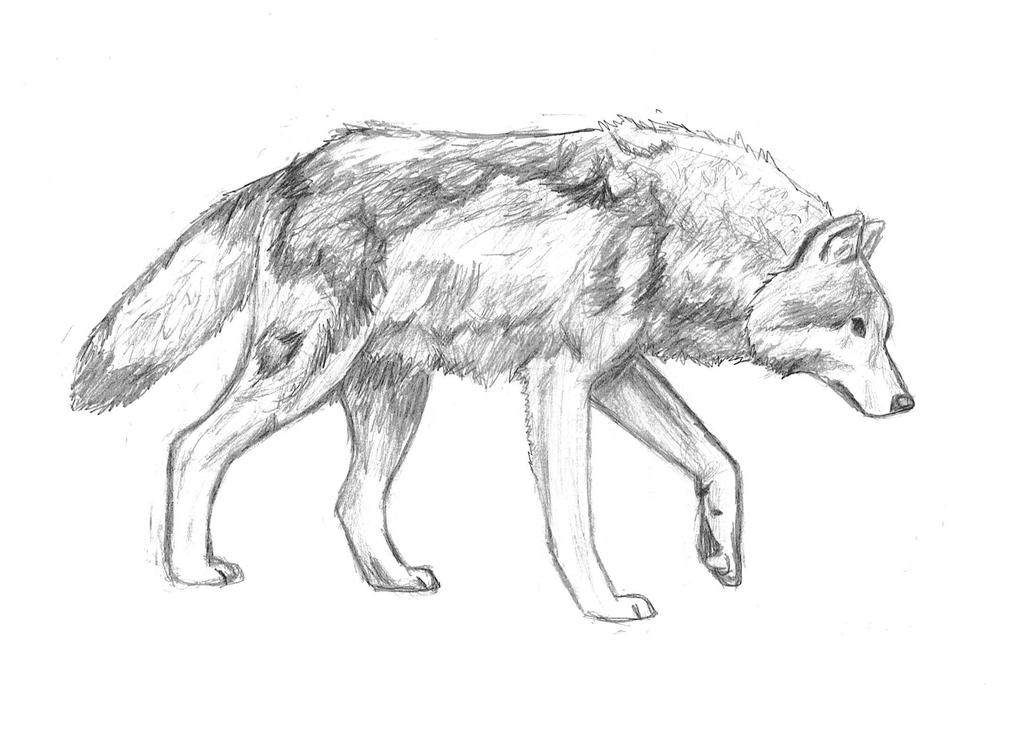 Easy Wolf Pencil Drawings