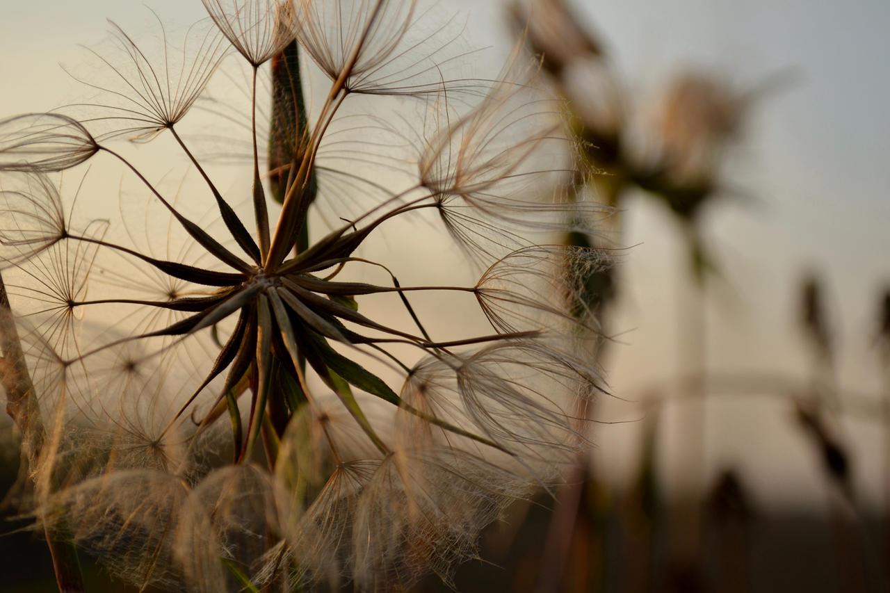 Autumn Flowers by adamwita