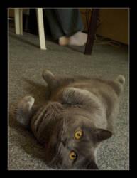 Smile cat :3