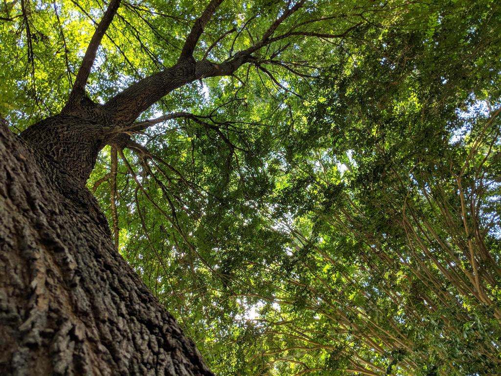 tree by aksheus