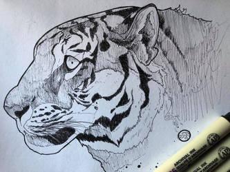 Tiger Eye by pikkaria