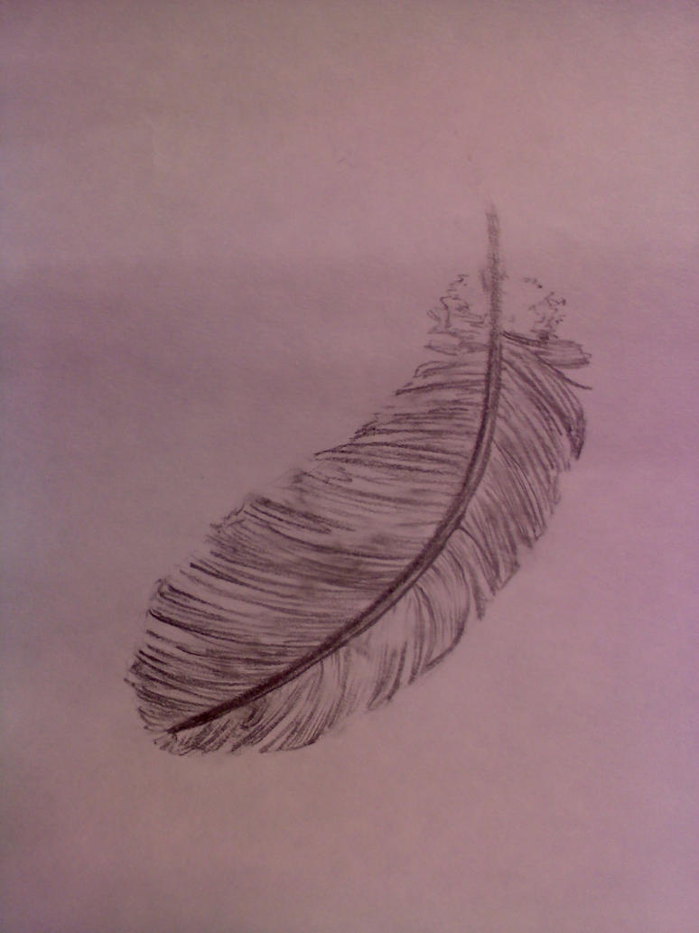 Feather Sketches Feather sketch by 8male8