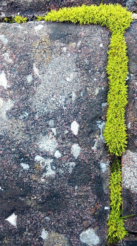 Moss by kara5521