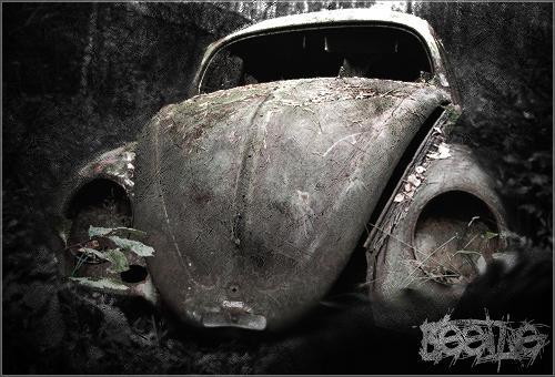 Beetle by dasler