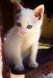 White kitty by AutumnIulia