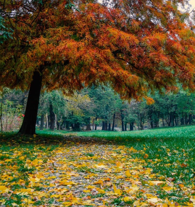 All religions are branches of the same tree by AutumnIulia