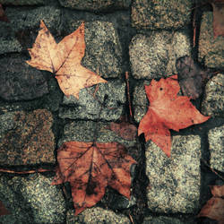 How beautiful the leaves grow old by AutumnIulia