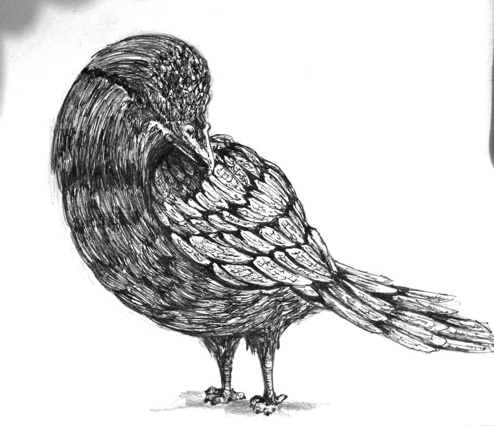 Bird exercise by ElveinAC