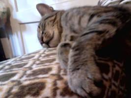 Sleepy Cat by Waspdrake