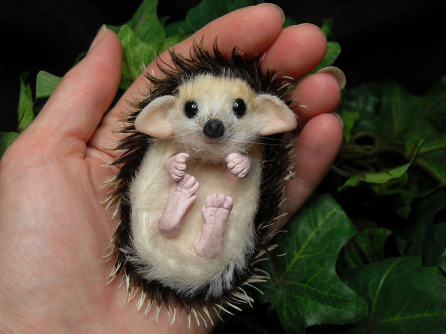 Baby Hedgehog by TreasuredByU