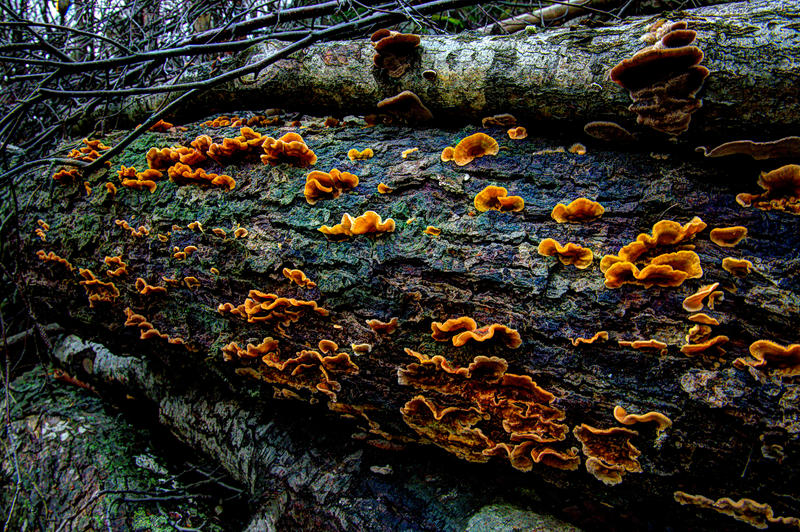 Decaying Wood By Enigmaticus On Deviantart
