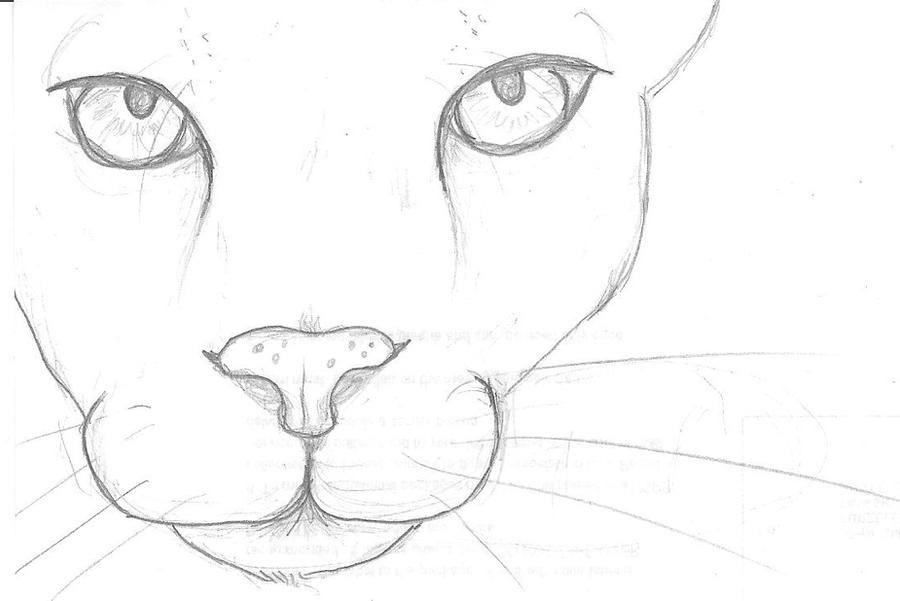 Cougar Face Line Drawing : The gallery for gt puma face drawing