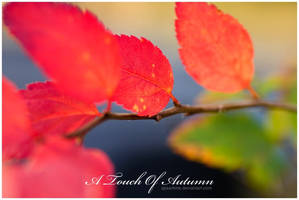 A Touch Of Autumn by speartime