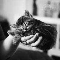 Sleeping in your hand by speartime