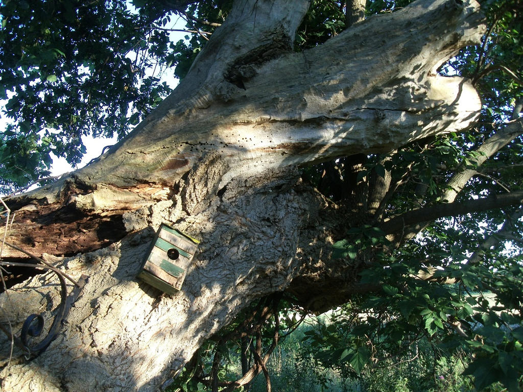 Tree Inside Of A Tree by Crash-Box