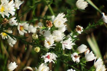 Last flowers of summer by Crash-Box