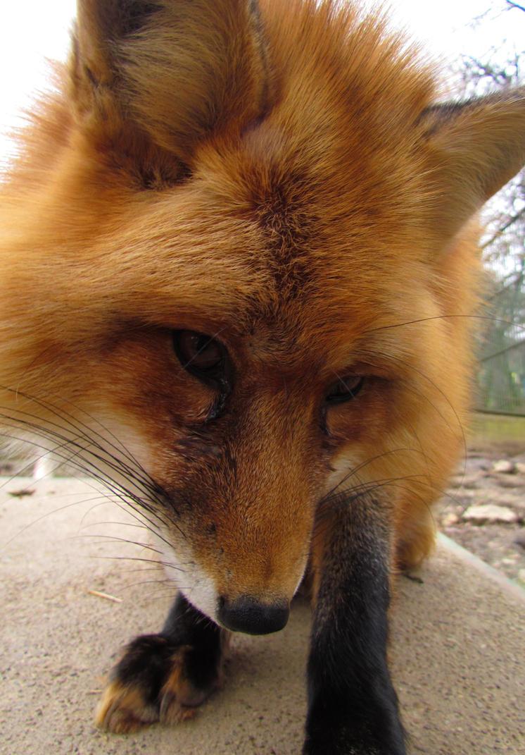 Foxy by Misfits13th
