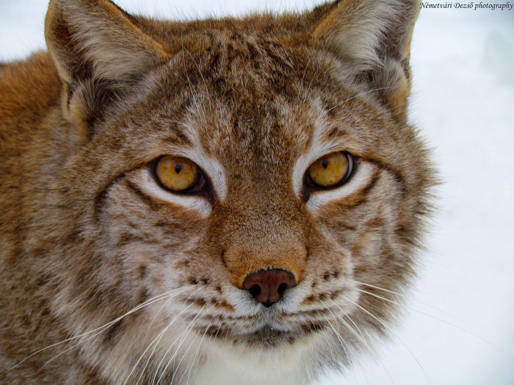 Predator eyes by Misfits13th