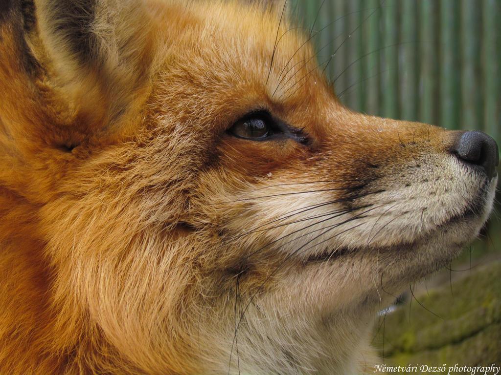 Fox II. by Misfits13th