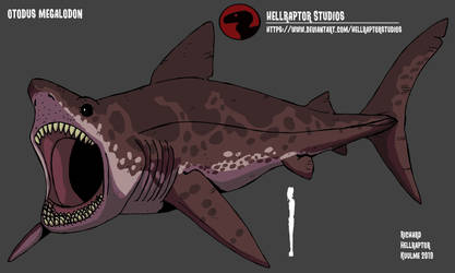 Otodus megalodon by HellraptorStudios