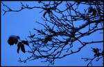 Winter by Paparoachie