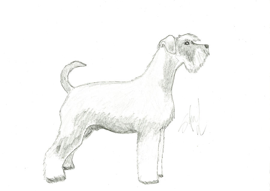 Schnauzer Drawing Easy: Schnauzer By CepeSnuffe On DeviantART