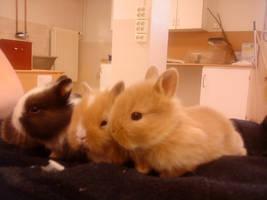 Bunnybabies by CepeSnuffe