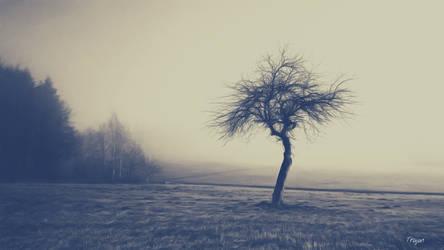 The Mist by Trajan-pro