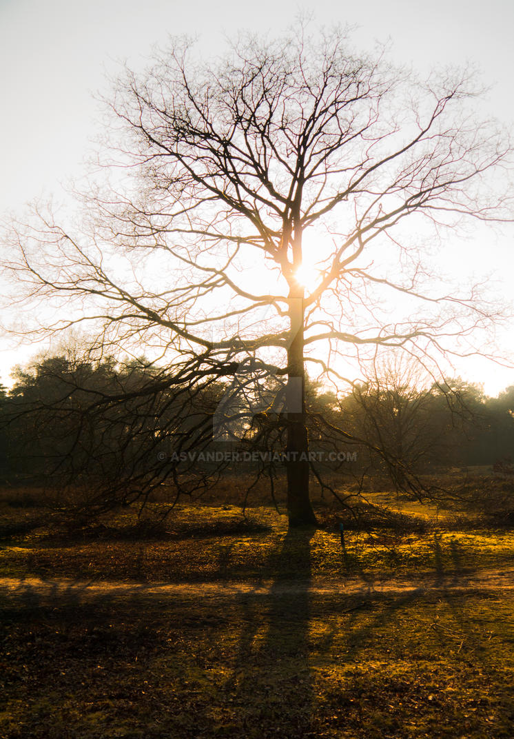 The Magic Tree by Asvander