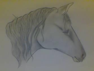 Horse Headshot