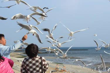 Seagull by piahs11m