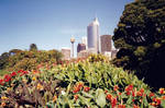 Sydney CBD Skyline from the Botanical Gardens 1994 by rbompro1