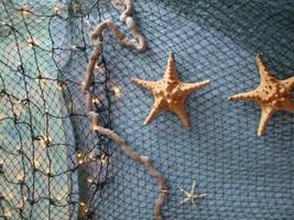 Starfish by judoj82