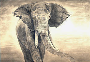 african elephant by raghulale