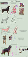 Dog Anatomy Tutorial 1