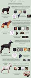 Dog Anatomy Tutorial 2 by SleepingDeadGirl