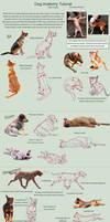 Dog Anatomy Tutorial 3