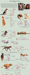 Dog Anatomy Tutorial 3 by SleepingDeadGirl