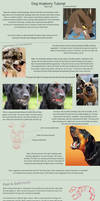 Dog Anatomy Tutorial 4