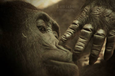 Your ancestor by Lawiane