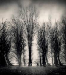 treesII by uzengia