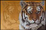 Wild Life Series : Tiger