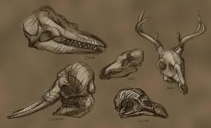 Animal Skulls by Alemja
