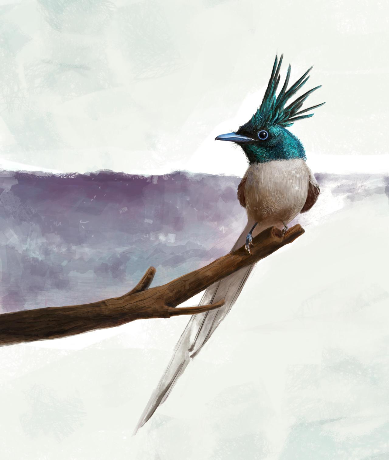Asian Paradise flycatcher by hmhankypanky