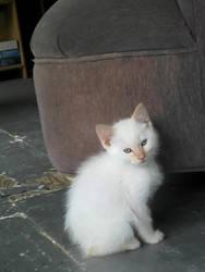 Nermal the Nameless Kitten