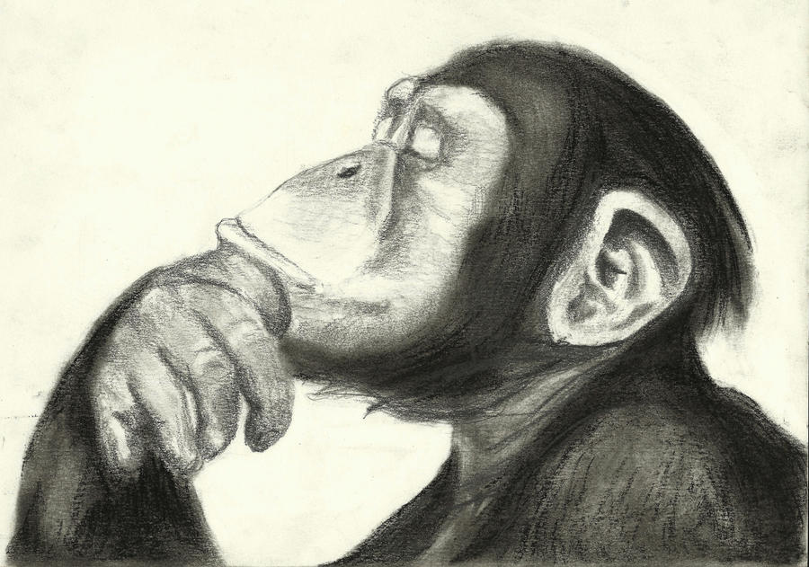 Thinking Monkey - Walls Need Love - Touch of Modern
