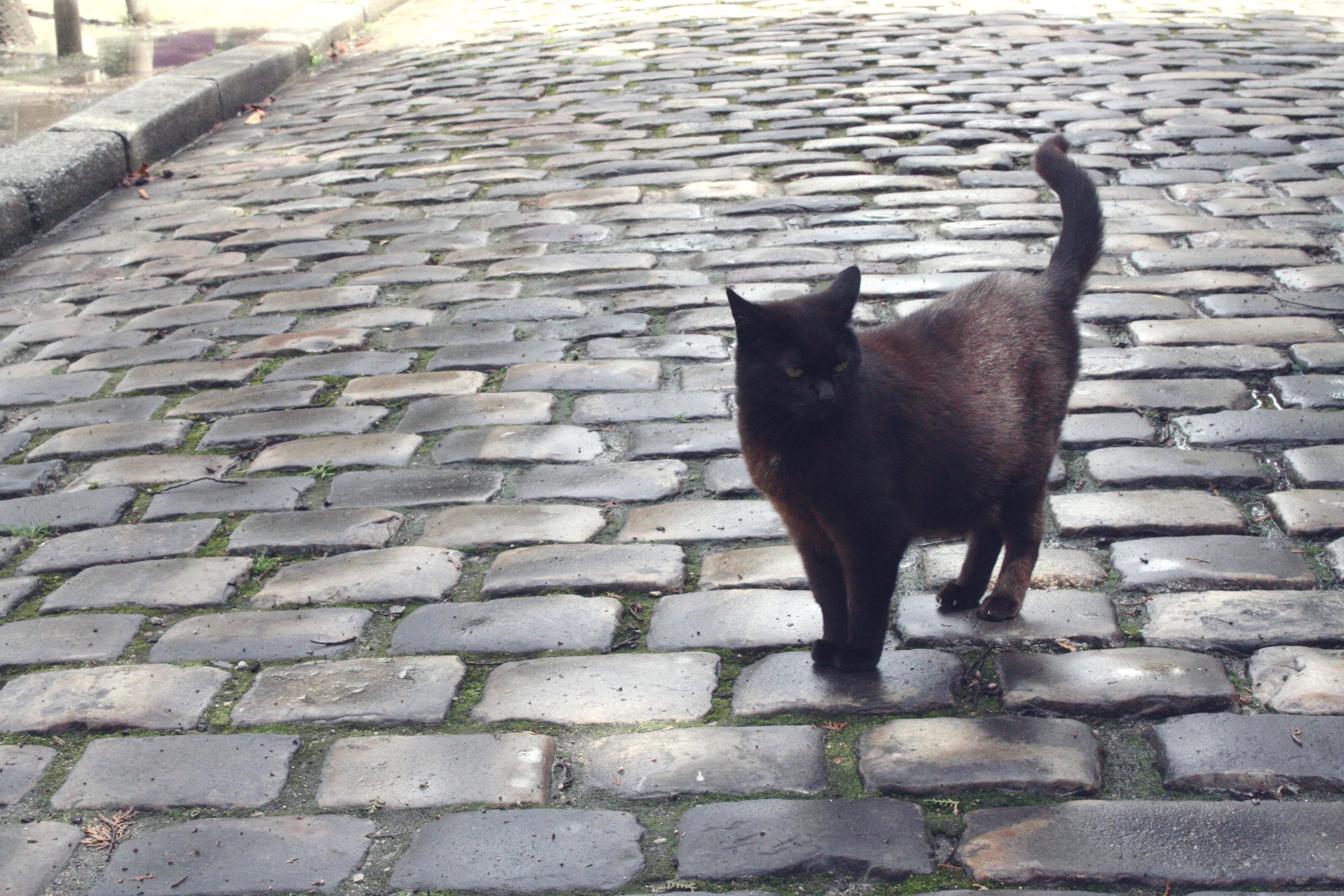 Cat by TLovalova