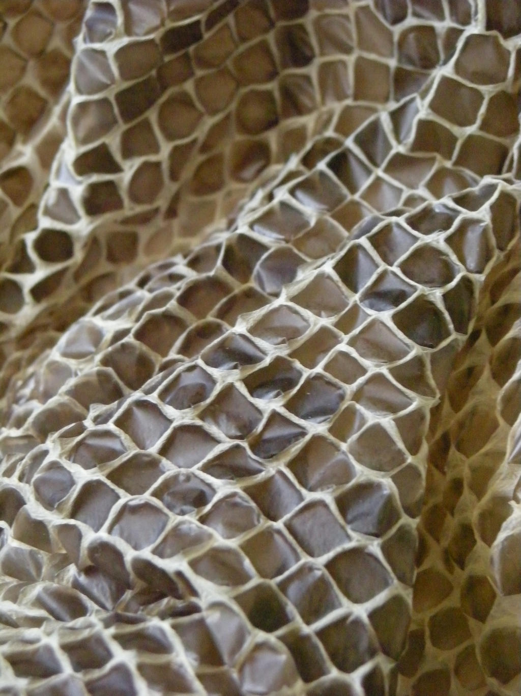 snake skin 002