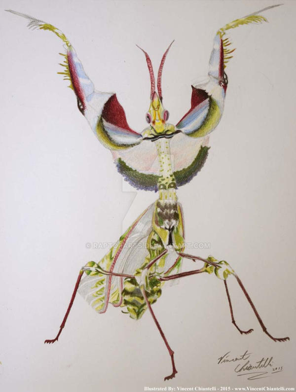 Devil Flower Mantis Illustration by RaptorArts