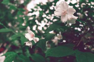 White Flowers by KhaledReese